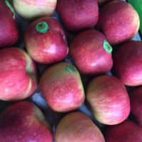 Fruit lepotagercoudoux.fr
