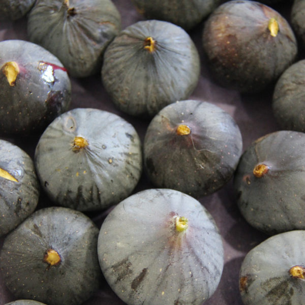 figues provence
