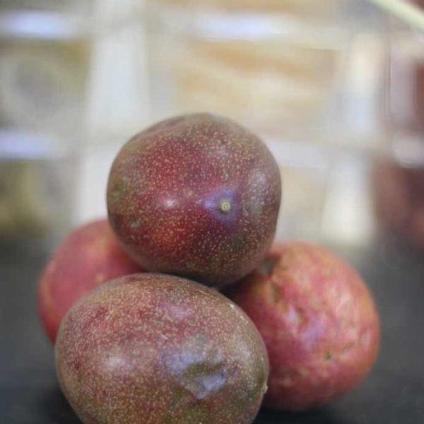 Fruits-le-potager-coudoux