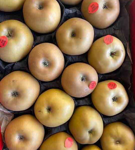 pomme-canada-reinette-potager-coudoux