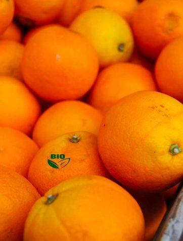 Fruit - le Potager Coudoux