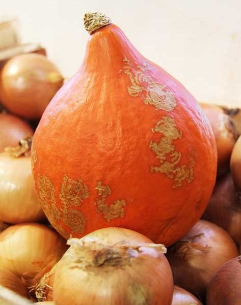 Légumes - le potager coudoux