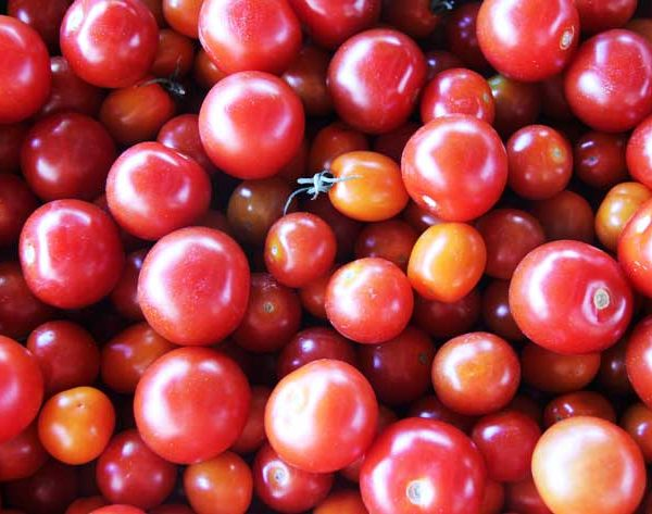Légumes - tomate cerise - le potager coudoux
