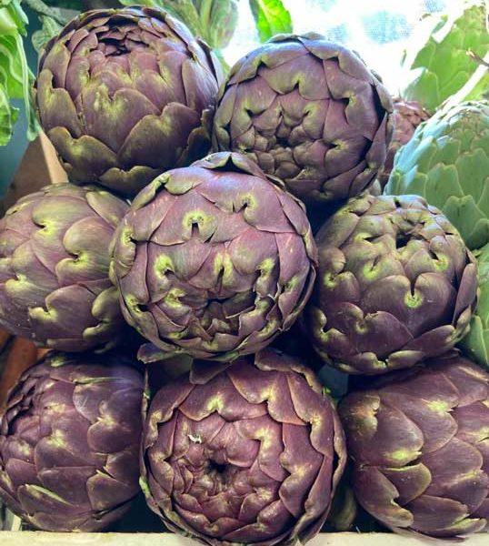 artichaut-salambo-le-potager-de-coudoux