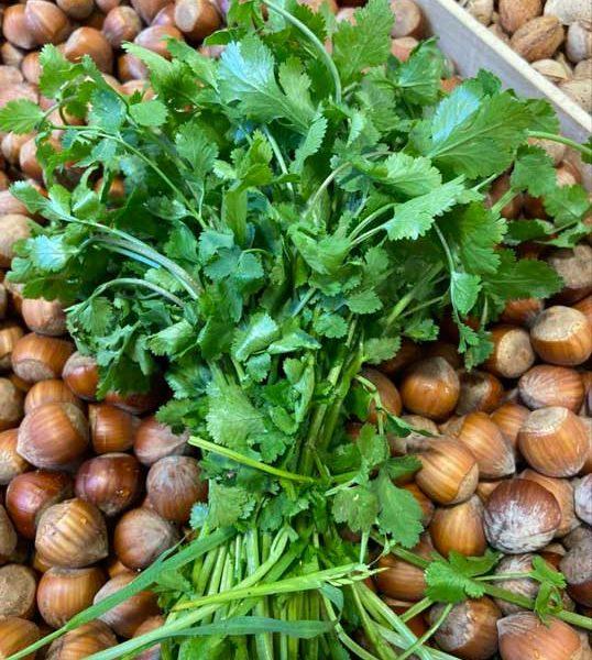 bouquet-coriandre-le-potager-de-coudoux