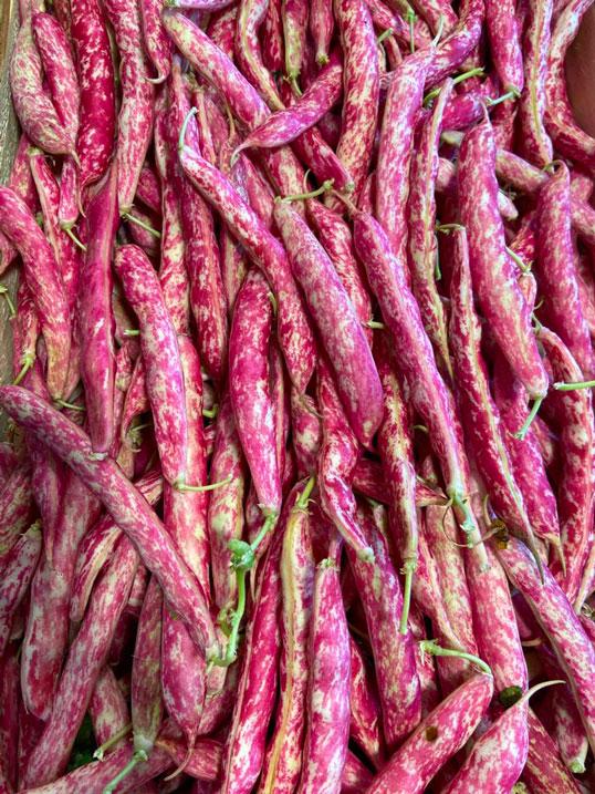 coco-rouge-anciennes-provence-potager-coudoux