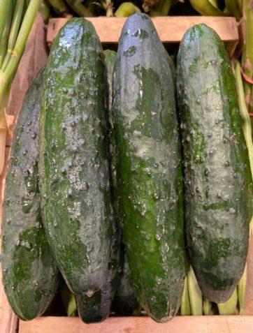concombre-noa-le-potager-de-coudoux