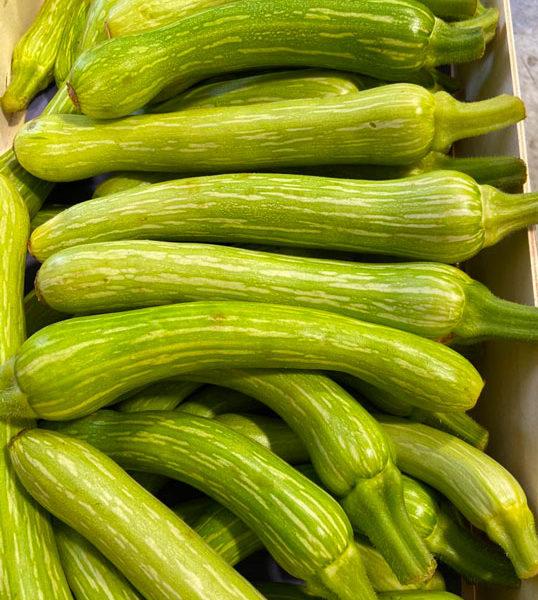 courgette-bio-nicoise-provence-potager-coudoux