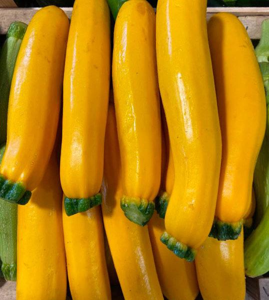 courgettes-jaunes-provence-potager-coudoux