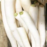 legume-navet-bio-potager-coudoux