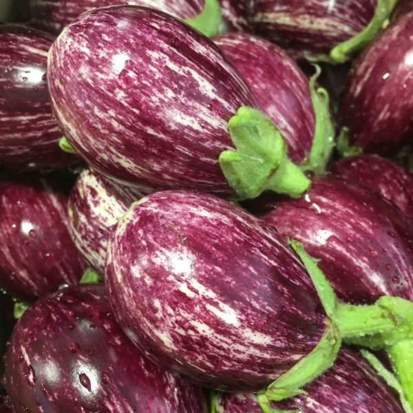 mini auberginetigrée le potager de coudoux
