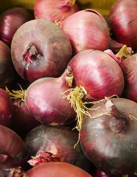 oignon-rouge-sec-le-potager-de-coudoux