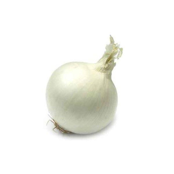 oignon-sec-blanc-sec-potager-de-coudoux