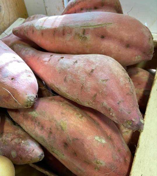 patate-douce-le-potager-de-coudoux