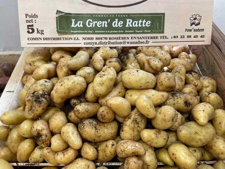 la ratte-la-gren-potager-de-coudoux