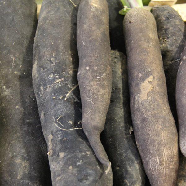 radis-noir-potager-coudoux