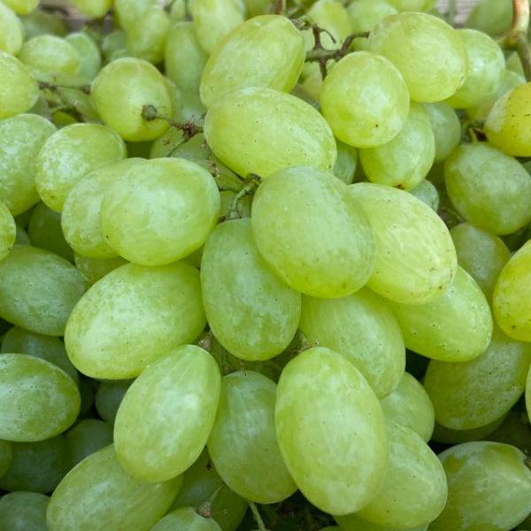 raisin-ss-pepin-potager-coudoux