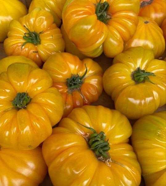 tomate-ananas-potager-coudoux
