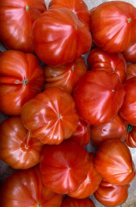 tomate-coeur-de-boeuf-potager-coudoux