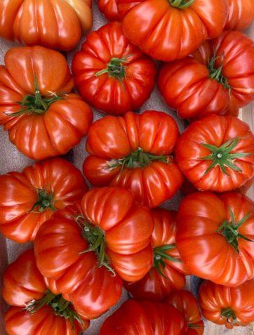 tomate-marmande-potager-coudoux