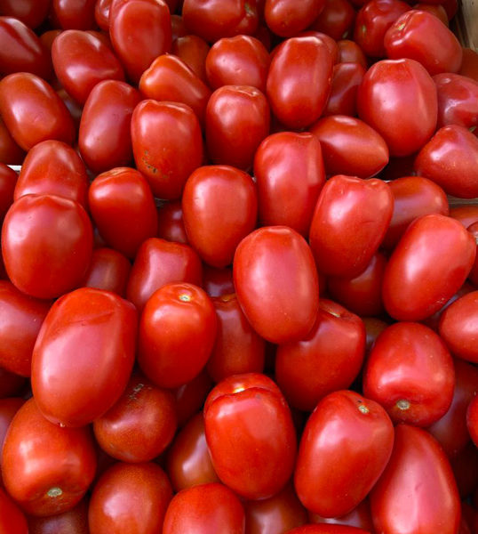 tomate-roma-provence-potager-coudoux