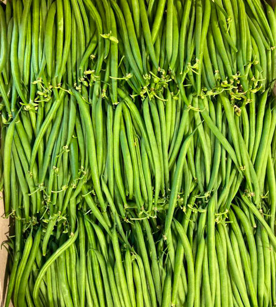 haricots-verts-extra-fin-potager-coudoux