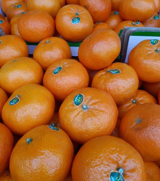 Fruit le Potager Coudoux