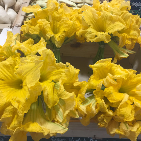 fleurs-courgettes-potagre-de-coudoux