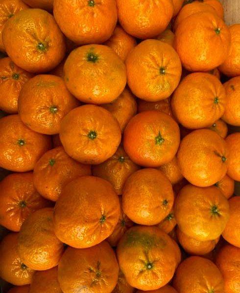 mandarine-de-sicile-le-potager-de-coudoux