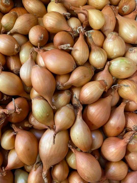 oignons-grelot-vrac-le-potager-de-coudoux