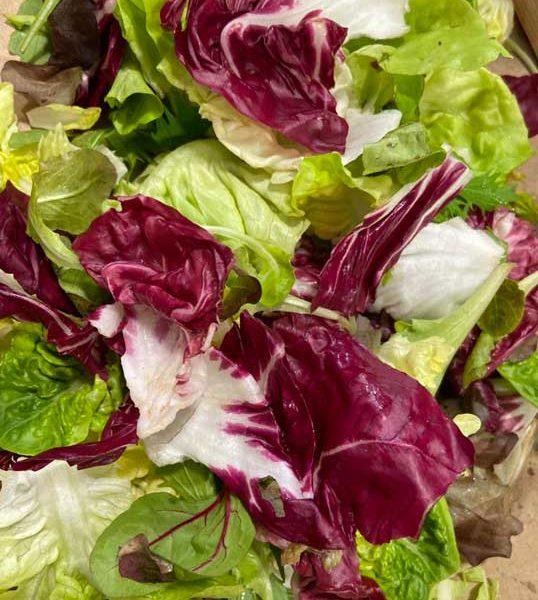 salade-melangee-vrac-le-potager-de-coudoux