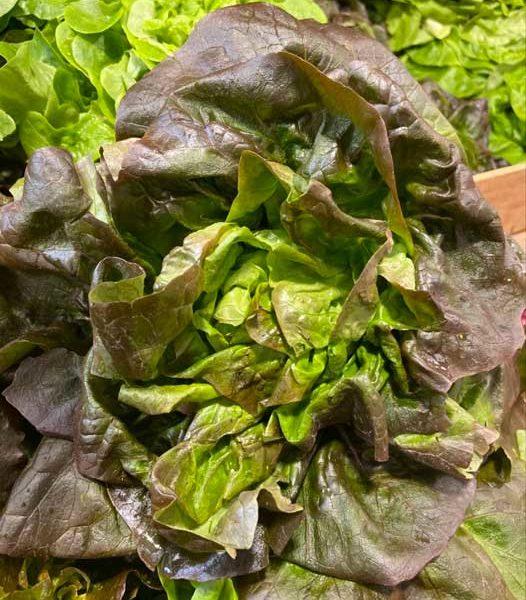 salade-rougette-le-potager-de-coudoux