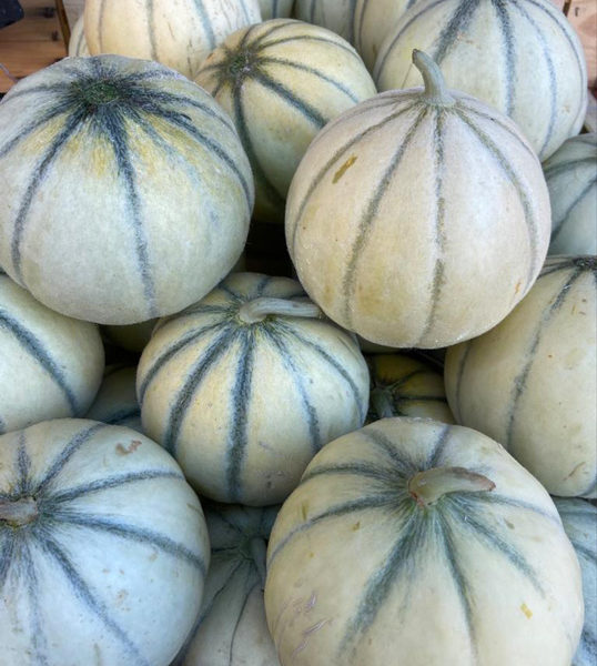 Melon-gros-provence-potager-coudoux