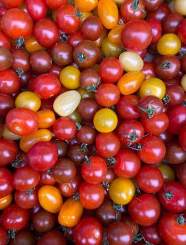 tomate-cerise-multi-potager-coudoux