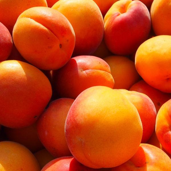 Abricots-provence-potager-coudoux