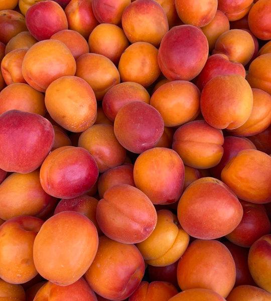 abricot-provence-potager-coudoux