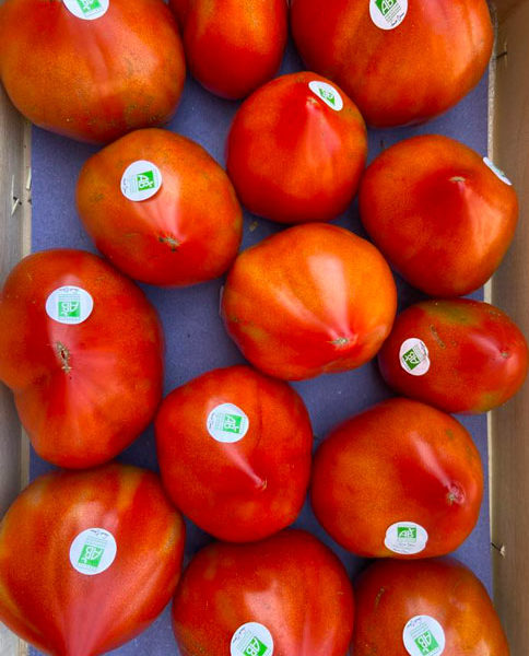 tomates-coeur-de-boeuf-bio-anciennes-provence-potager-coudoux