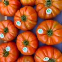 tomates-marmande-bio-anciennes-provence-potager-coudoux