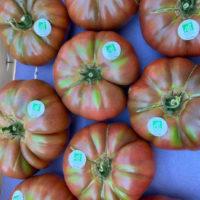 tomates-noir-de-crimee-bio-anciennes-provence-potager-coudoux