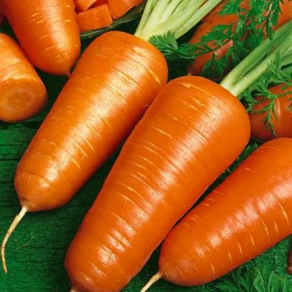 carotte-chantenay