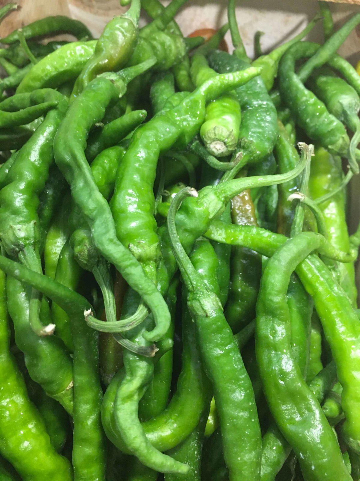 petits piments verts le potager de coudoux